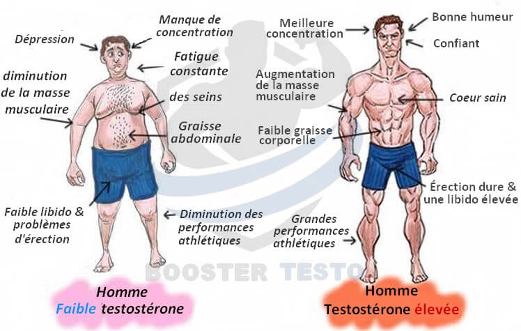 Niveau de testostérone chez deux hommes
